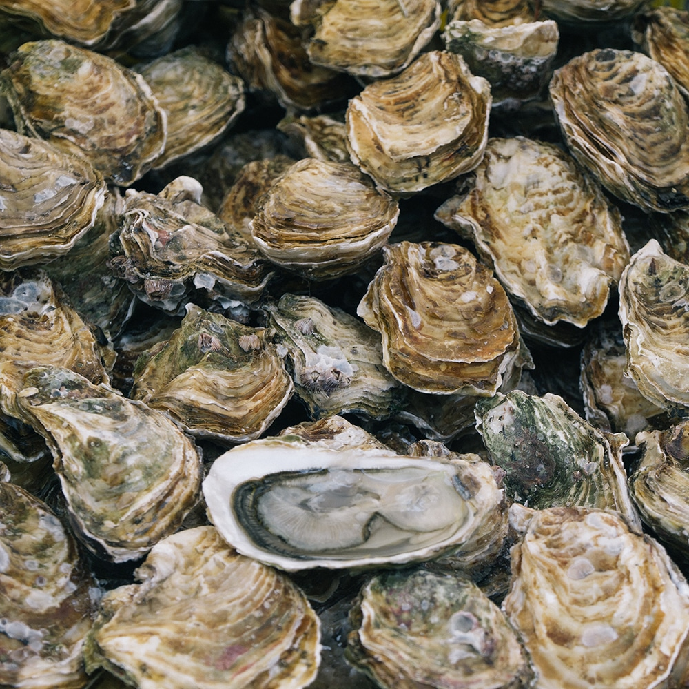 oyster lawsuit