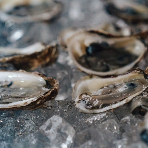 Oyster Lawsuit Taylor Martino