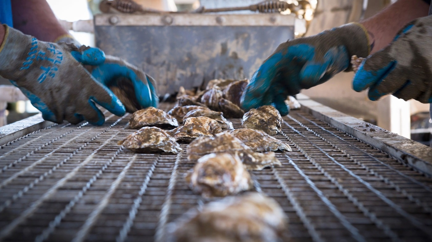 oyster farming lawsuit