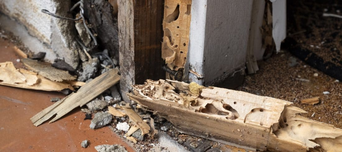 Termite Damage Claims